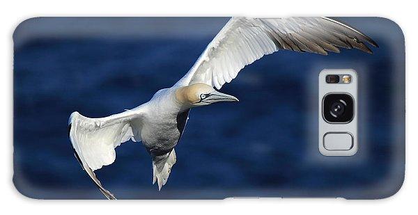 Northern Gannet In Flight Galaxy Case