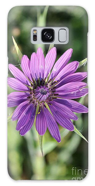 Salsify Flower Galaxy Case by George Atsametakis