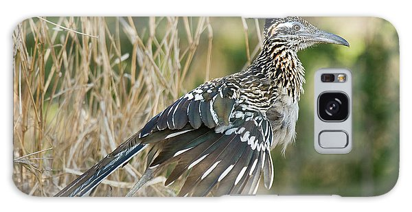 Greater Roadrunner Galaxy Case - Usa, Texas, Starr County by Jaynes Gallery