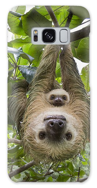 Hoffmanns Two-toed Sloth And Old Baby Galaxy Case