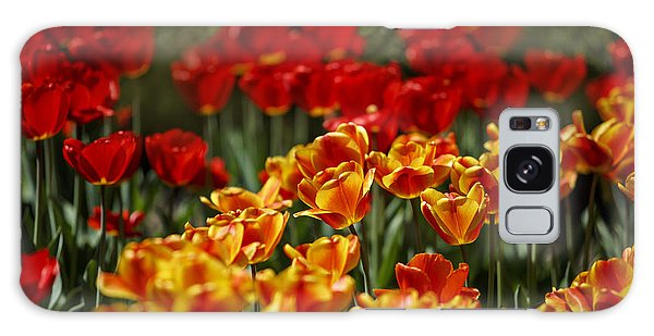 Tulip Galaxy Case - Red And Yellow Tulips by Nailia Schwarz