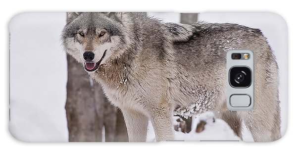 Timber Wolf In Winter Galaxy Case by Wolves Only