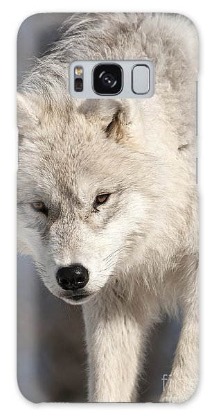 Arctic Wolf Pup Galaxy Case