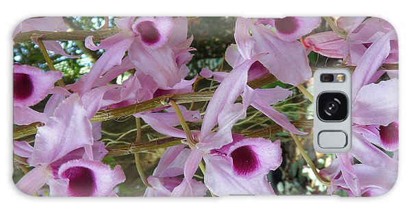 Orchids--dendrobium Galaxy Case