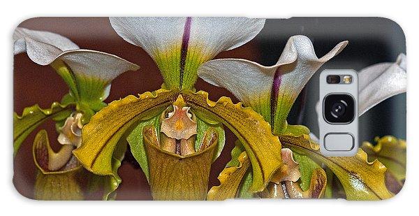 Paphiopedilum Orchid Galaxy Case