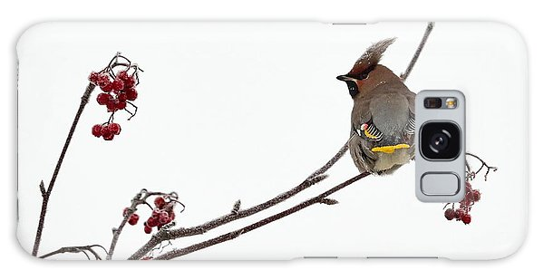 Bohemian Waxwings Eating Rowan Berries Galaxy Case