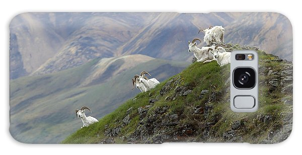 Alaskan Dall Dahl-sheep Image Art  Galaxy Case