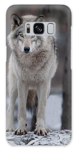 Timber Wolf  Galaxy Case