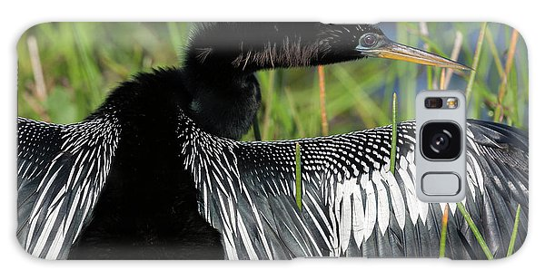 Usa, Florida, Everglades National Park Galaxy Case