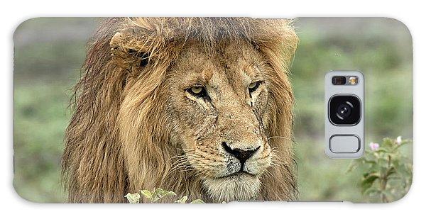 Africa, Tanzania, Serengeti Galaxy Case