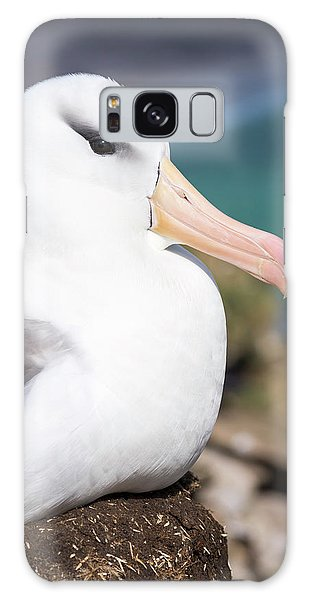 Black-browed Albatross (thalassarche Galaxy S8 Case