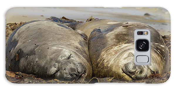 Carcass Galaxy Case - Falkland Islands, Carcass Island by Jaynes Gallery