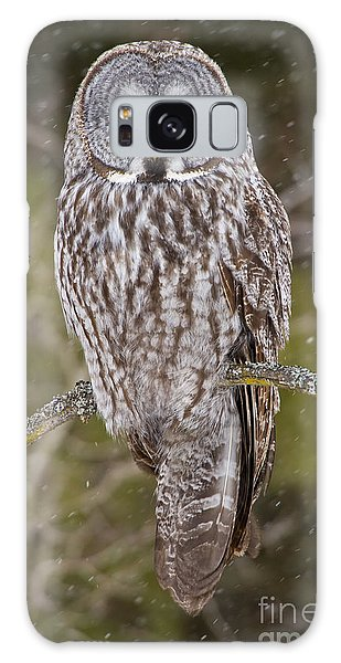 Great Gray Owl Galaxy Case