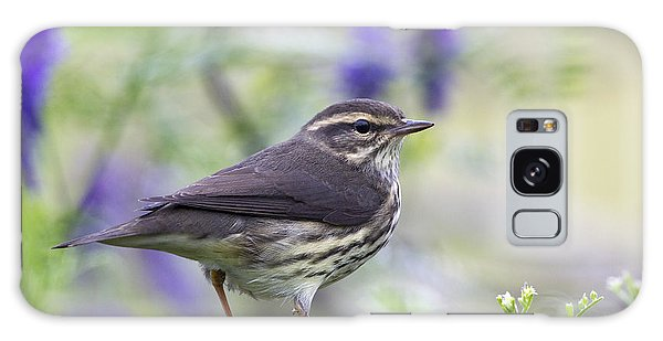 Northern Waterthrush Galaxy Case