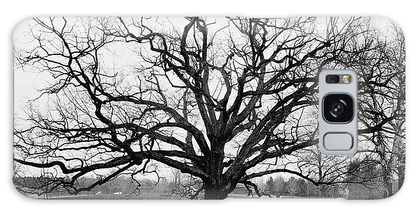 A Bare Oak Tree Galaxy Case