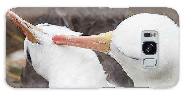 A Black Browed Albatross Galaxy Case