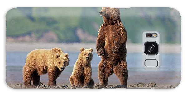 Grizzly Bears Galaxy Case - A Brown Bear Mother And Cubs Walks by Hugh Rose