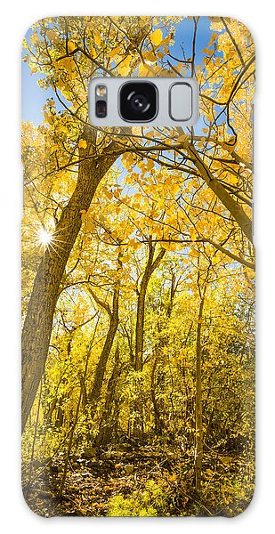 A Canopy Of Aspens At Mcgee Creek In The Eastern Sierras Galaxy Case