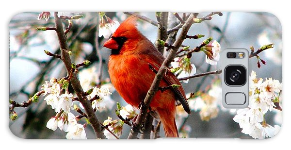 A Cardinal In The Apple Blossoms Galaxy Case