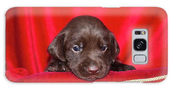 Chocolate Lab Galaxy Case - A Chocolate Labrador Retriever Puppy by Zandria Muench Beraldo
