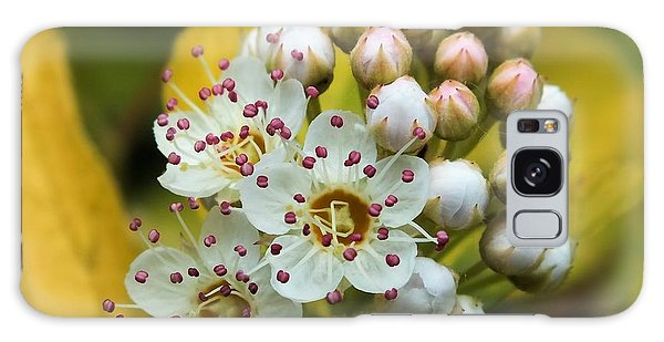 Galaxy Case featuring the photograph A Close Look 2 by Gene Cyr