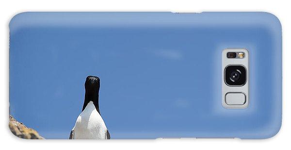 A Curious Bird Galaxy Case