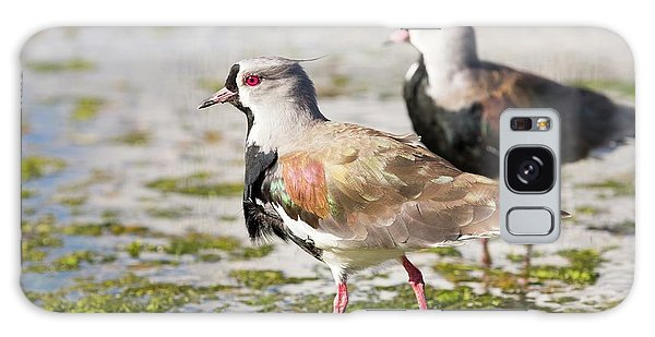 Lapwing Galaxy Case - A Flock Of Southern Lapwings by Ashley Cooper
