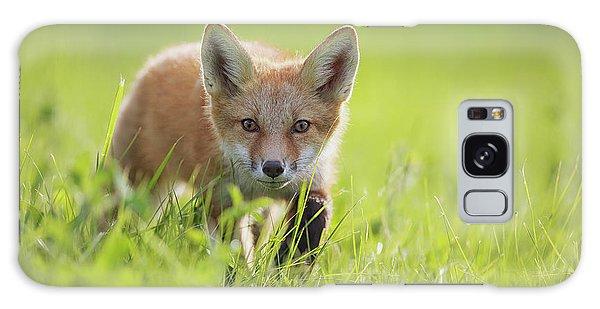 Sly Galaxy Case - A Fox In The Grass  Montreal, Quebec by Vladislav Kamenski