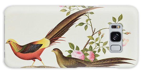 A Golden Pheasant Galaxy Case by Chinese School