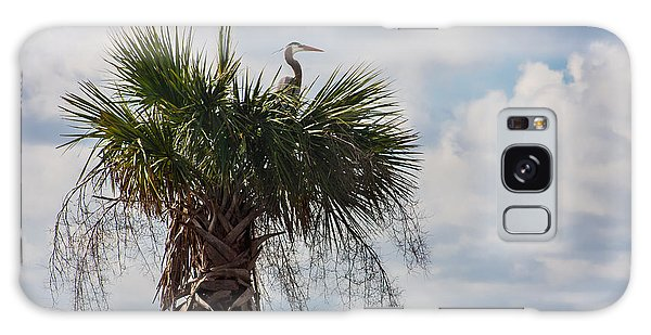 A Great Blue Heron Nests On A Cabbage Palmetto Galaxy Case by Karen Stephenson