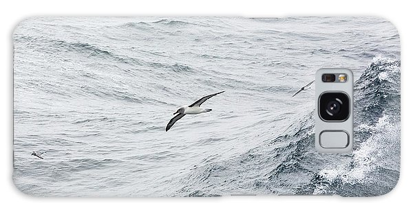 A Grey Headed Albatross Galaxy Case