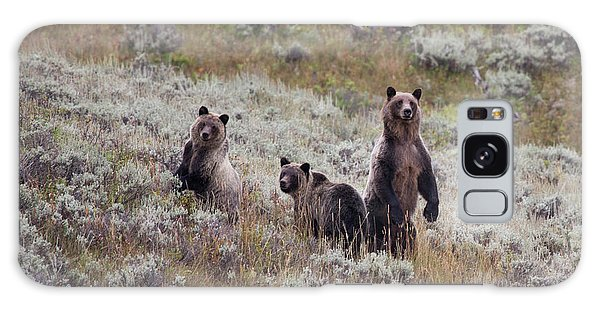 Grizzly Bears Galaxy Case - A Grizzly Bear With Its Two Cubs by Ben Horton