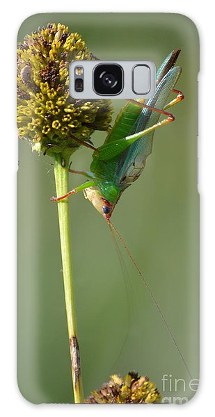A Handsome Meadow Katydid Galaxy Case by Kathy Gibbons