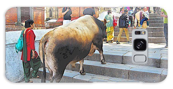 A Holy Cow Climbing Steps From Bagmati River In Kathmandu-nepal  Galaxy Case