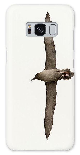 Albatross Galaxy S8 Case - A Light Mantled Albatross by Ashley Cooper