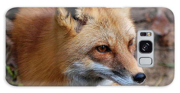 A Little Red Fox Galaxy Case by Kathy Baccari