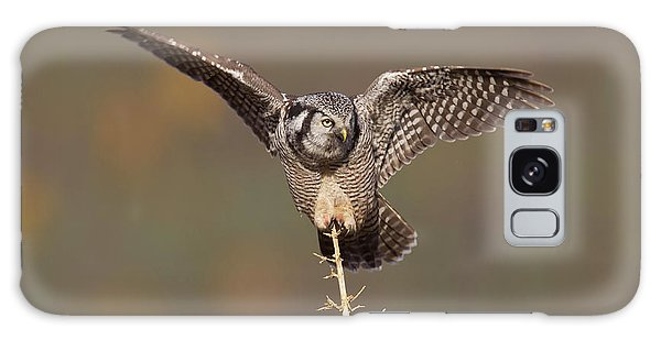 Boreal Forest Galaxy Case - A Northern Hawk Owl Surveys The Boreal by Hugh Rose
