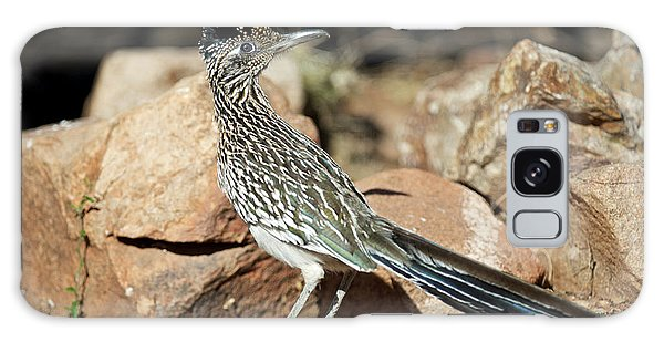 Greater Roadrunner Galaxy Case - A Road Runner Pauses Momentarily by Richard Wright