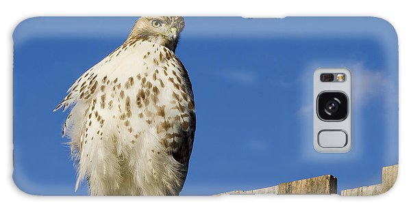 A Rough Legged Hawk On The Hunt Galaxy Case by MaryJane Armstrong