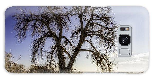 A Simple Tree Galaxy Case