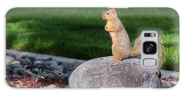 A Squirrel On A Rock Galaxy Case