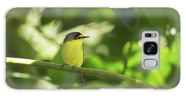Flycatcher Galaxy Case - A Yellow-lored Tody Flycatcher by Alex Saberi