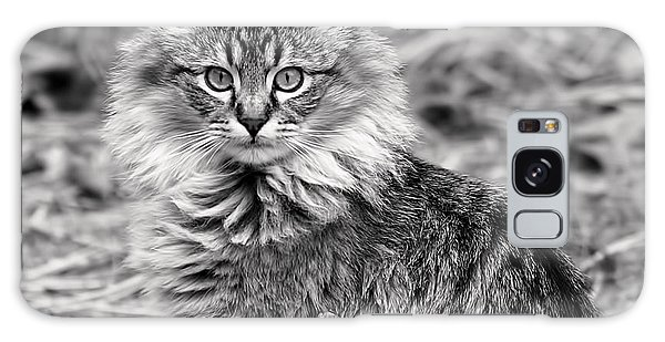 A Young Maine Coon Galaxy Case