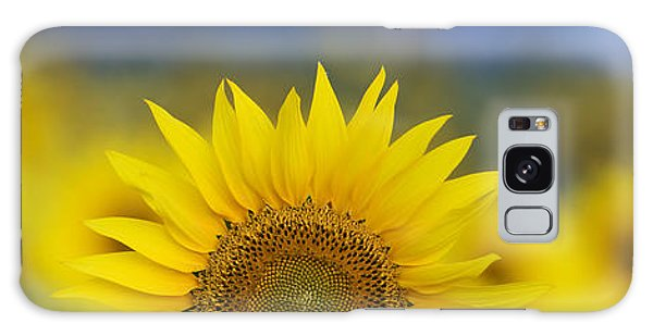 Helianthus Annuus Galaxy Case - Abstract Sunflower Panoramic  by Tim Gainey