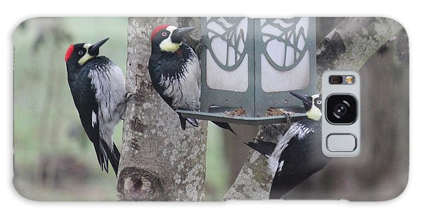 Acorn Woodpeckers Galaxy Case by Erica Hanel