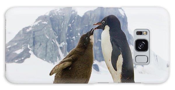 Adelie Penguin Chick Begging For Food Galaxy Case by Yva Momatiuk John Eastcott