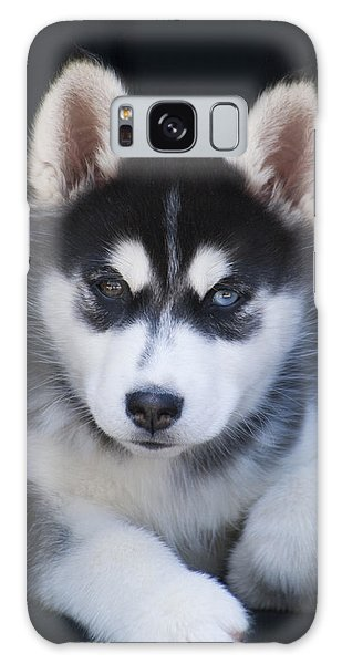 Adorable Siberian Husky Sled Dog Puppy Galaxy Case