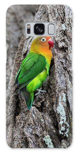Lovebird Galaxy S8 Case - Africa Tanzania Fischer's Lovebird by Ralph H. Bendjebar