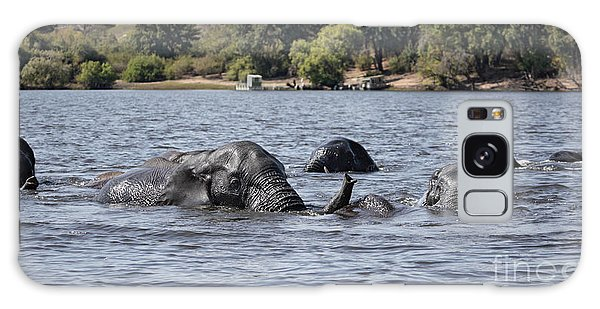 African Elephants Swimming In The Chobe River Galaxy Case