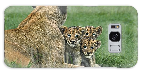 African Lion Cubs Study The Photographer Tanzania Galaxy Case